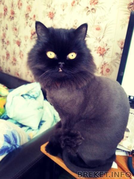 кривозубик котя
