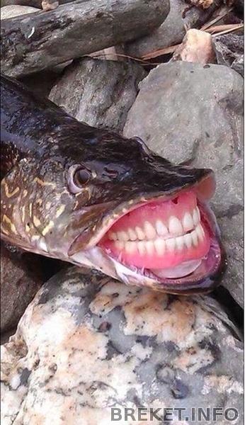 Рыба с зубами